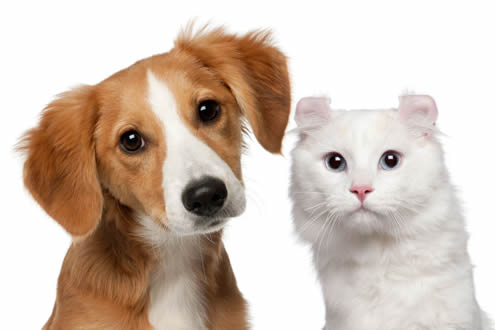 cat-dog-home-page